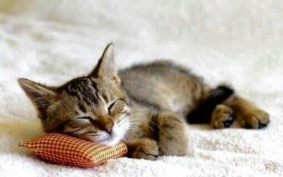 Prendre soin de son sommeil.